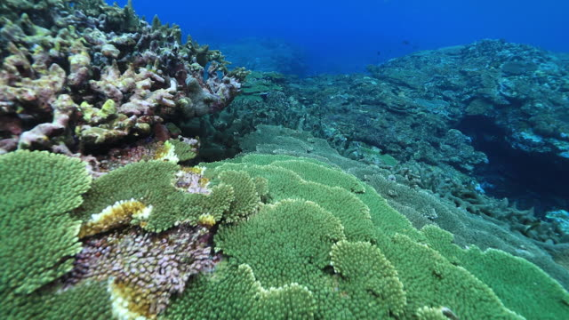 coral reef off the amami islands - snorkelling stock videos & royalty-free footage