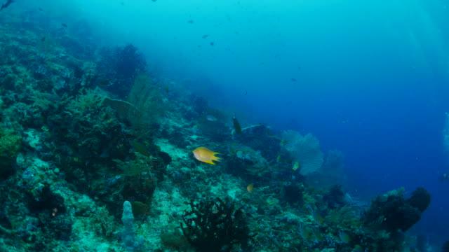 vídeos y material grabado en eventos de stock de arrecife de coral, raja ampat - protección de fauna salvaje