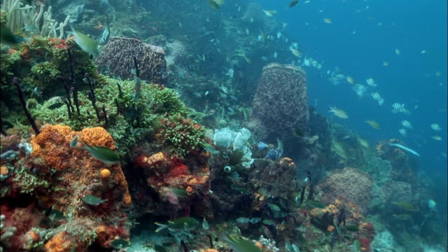 ms, coral reef, saint lucia - st lucia stock videos & royalty-free footage