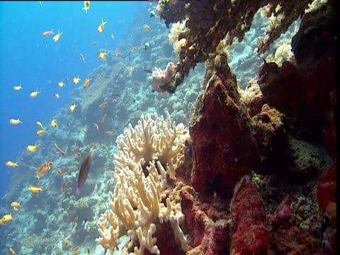 Coral reef scenic