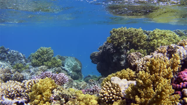 Coral reef sea life with lot of tropical Fish / Red Sea