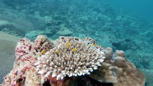 テーブルサンゴとコピースペースを持つサンゴ礁の海の風景 - 外骨格点の映像素材/bロール