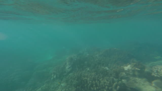 coral reef, seen on and under the water of a woman and her child - tahitian culture stock videos & royalty-free footage