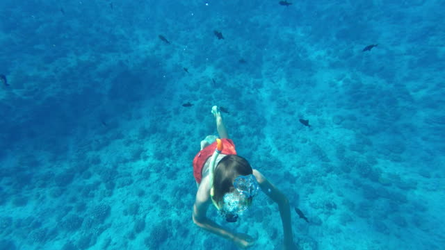 coral reef, seen on and under water of a child - tahitian culture stock videos and b-roll footage