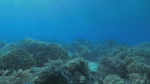 vídeos de stock, filmes e b-roll de recifes de corais sunburst submarina - ponto de vista de mergulhador