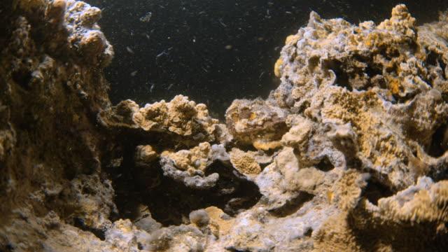 Coral reef under a dark water