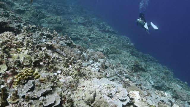 Coral reef onderzeese, Palau