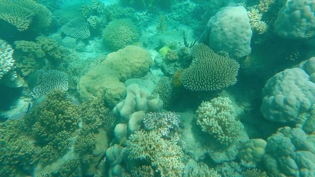 coral reef underwater, great barrier reef - reef stock videos & royalty-free footage