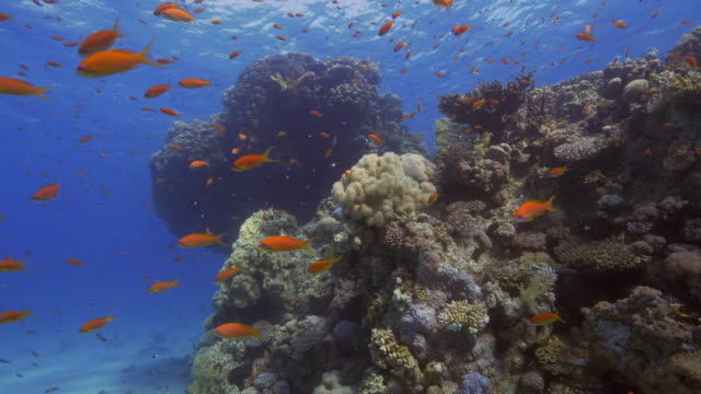 coral reef - animals in the wild stock videos & royalty-free footage