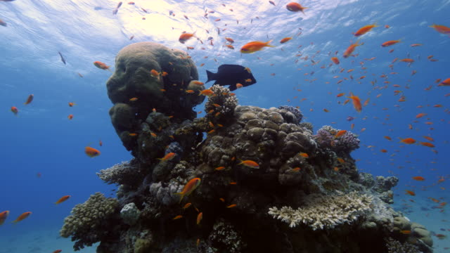 coral reef - red sea stock videos & royalty-free footage