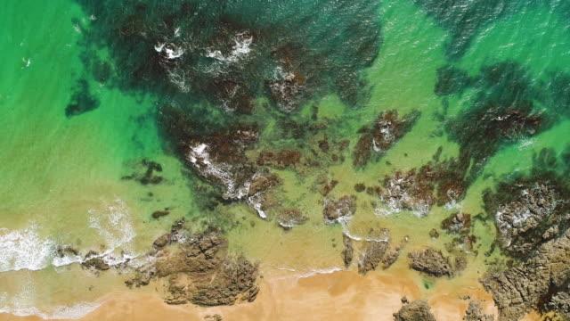 サンゴ礁。 - ニュージーランド べイ・オブ・アイランズ点の映像素材/bロール