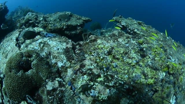 coral reef. - ゴーゴニアンコーラル点の映像素材/bロール