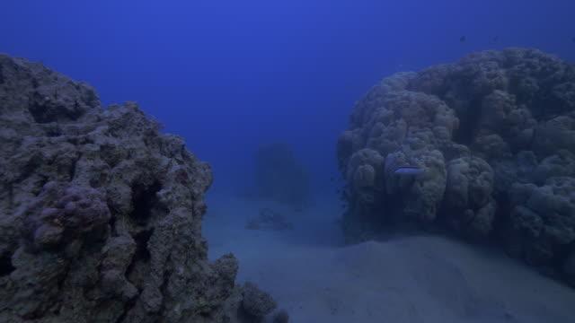 coral reef - ソフトコーラル点の映像素材/bロール