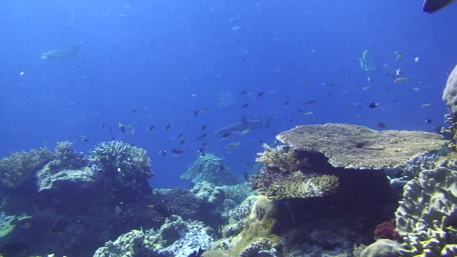 coral reef - 2008 stock videos and b-roll footage