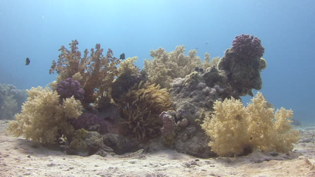 coral reef - medium group of animals stock videos & royalty-free footage