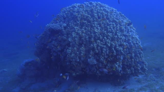 coral reef - 紅海点の映像素材/bロール