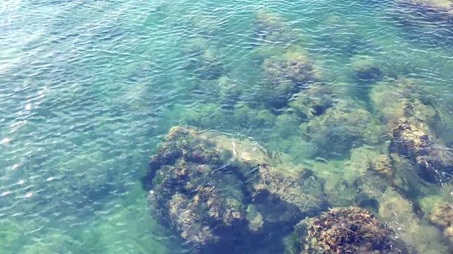 vídeos y material grabado en eventos de stock de vista del arrecife de coral desde arriba del agua cristalina del mar - bahía