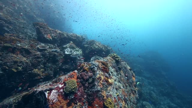 Coral Reef wall off the coast of the island of Pantar in Indonesia