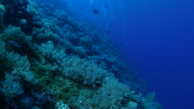 coral reef wall undersea - palau stock videos & royalty-free footage