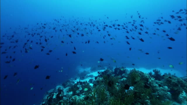 Coral reef with a school of fish