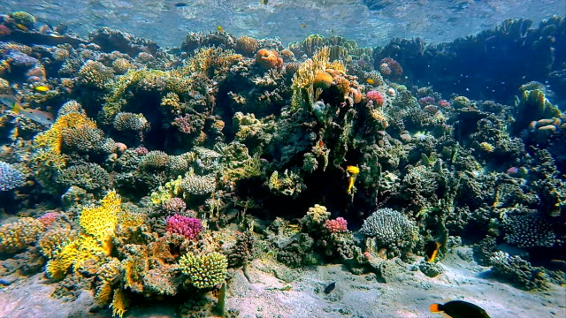 Coral reef with fisch sea life on Red Sea