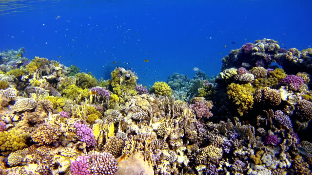Coral reef with lot of tropical Fish in Egypt