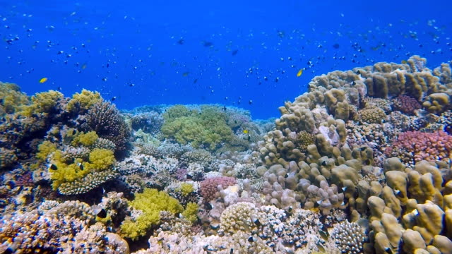 Coral reef with lot of tropical fish / Red Sea