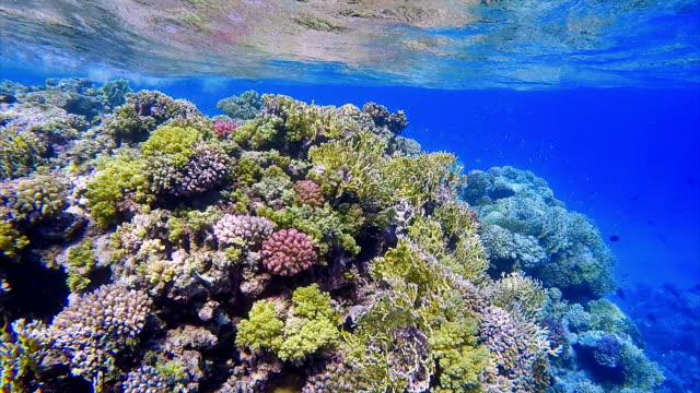 Coral reef with lot of tropical Fish / Sea life Red Sea
