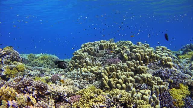 korallenriff mit viele bunte fische im roten meer - rotes meer stock-videos und b-roll-filmmaterial