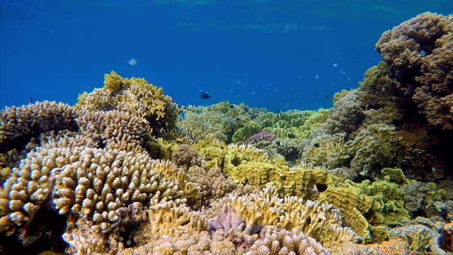 Coral reef with lots of colorful fishes on Red Sea