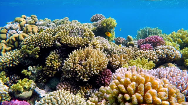 coral reef with sea life on red sea - aquatic organism stock videos & royalty-free footage