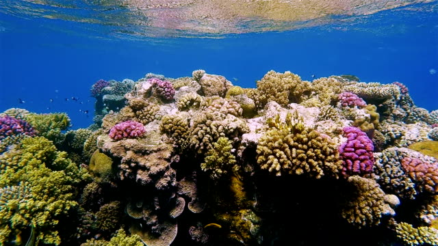 Coral reef with underwater sea life on Red Sea