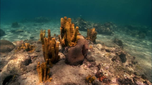 MS, Coral reef with yellow sponges, Saint Lucia