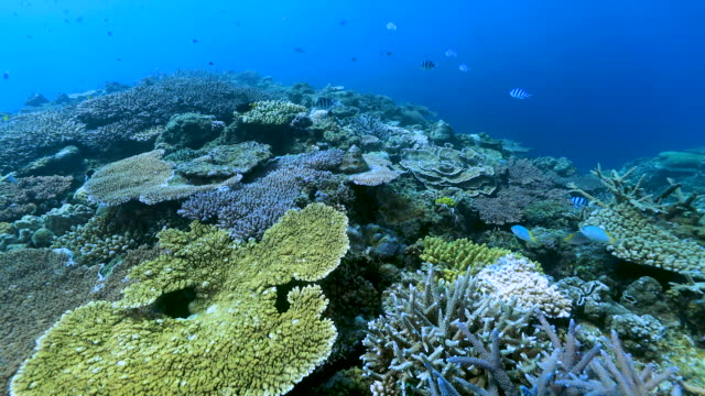Coral Reefs in Okinawa