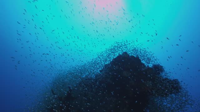 coral sea 4 - pacific ocean stock videos & royalty-free footage