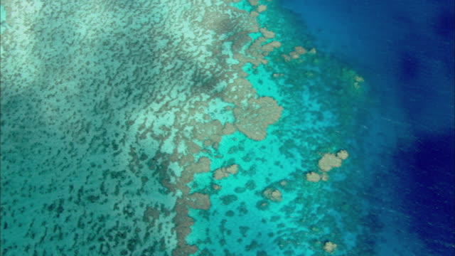 ms aerial coral sea and great barrier reef with coral polyps visible at times, cairns, queensland, australia - great barrier reef stock videos & royalty-free footage