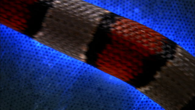 a coral snake slithers across a plasma disk. - striped stock videos & royalty-free footage