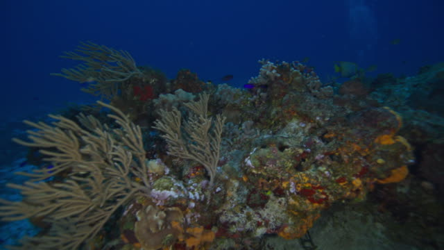 coral, sponge and reef - yucatan peninsula stock videos and b-roll footage