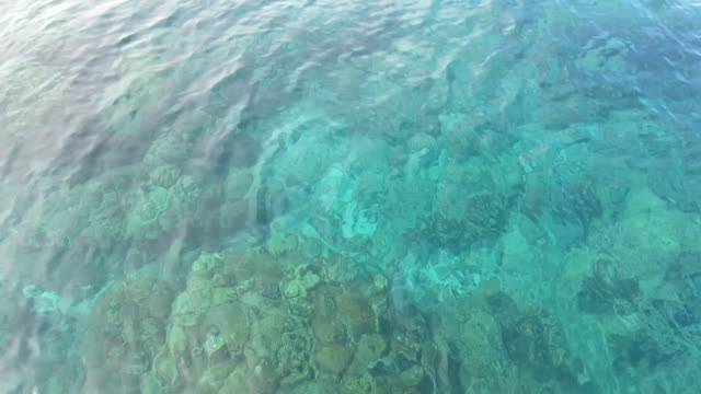 coral under clear blue sea water, rok island, krabi, thailand - ravine stock videos & royalty-free footage