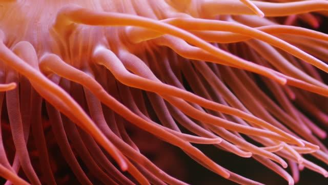 corallo - corallo molle corallo video stock e b–roll