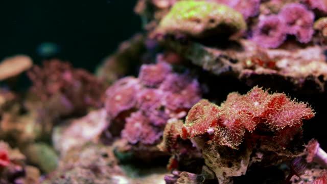 coral - aquarium stock videos & royalty-free footage