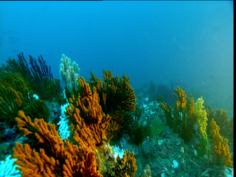 coral waves in current, panama - animal exoskeleton stock videos & royalty-free footage
