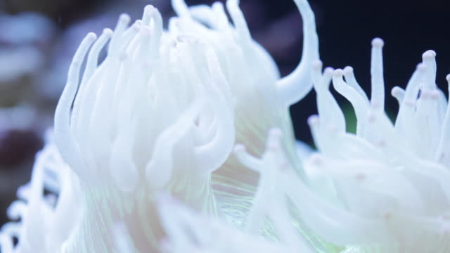 coral waving its tentacles in the current - sea anemone stock videos and b-roll footage