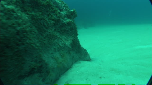 corals cover large outcroppings along the seabed in the mediterranean. - fondale marino video stock e b–roll
