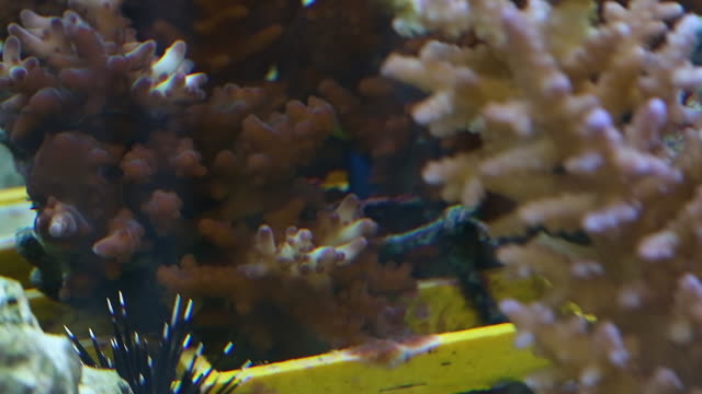 Corals for research