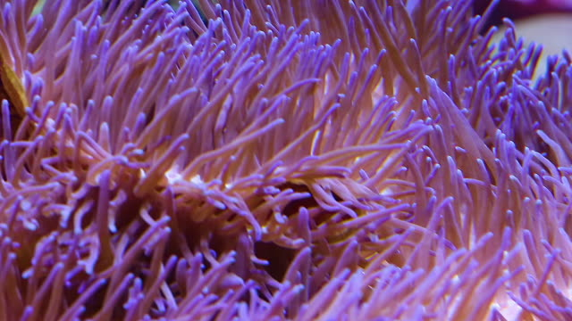 corals for research - aquatisches lebewesen stock-videos und b-roll-filmmaterial