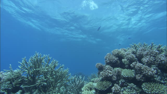 corals grow along the great barrier reef. - coral stock videos & royalty-free footage