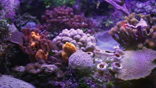 vídeos y material grabado en eventos de stock de ms corals in aquarium / playa del carmen, quintana roo, mexico - playa del carmen