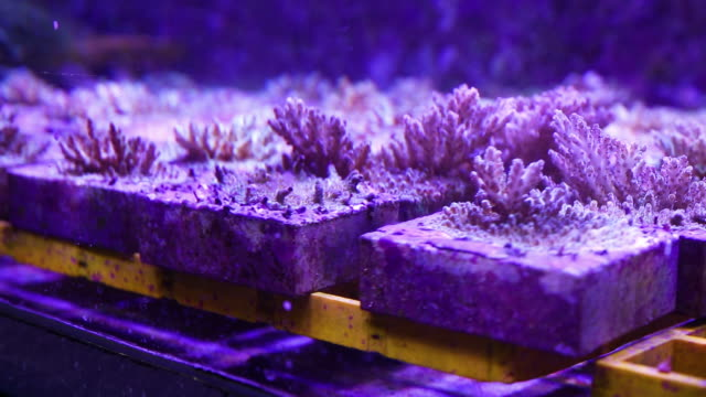 Corals inside an aquarium