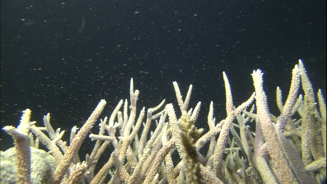 corals release eggs into the ocean. - coral stock videos & royalty-free footage